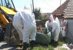 PESTĂ PORCINĂ PRAHOVA | Autorităţile ar putea începe uciderea preventivă a porcilor. Vezi în ce localităţi din Prahova!