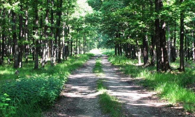 """Un prahovean care a """"poftit"""" la sex în grup a fost tâlhărit în pădurea de la Băile Felix"""
