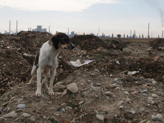 Pericol pe râul Teleajen! Zidul fostului depozit de deșeuri este la un pas de prăbușire