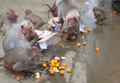Crăciunul animăluţelor, la Zoo Bucov. Necuvantatoarele au primit cadouri din partea copiilor