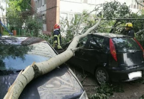 A fost PRAPAD, azi noapte in Prahova! Copaci daramati si cabluri de curent rupte de vantul puternic