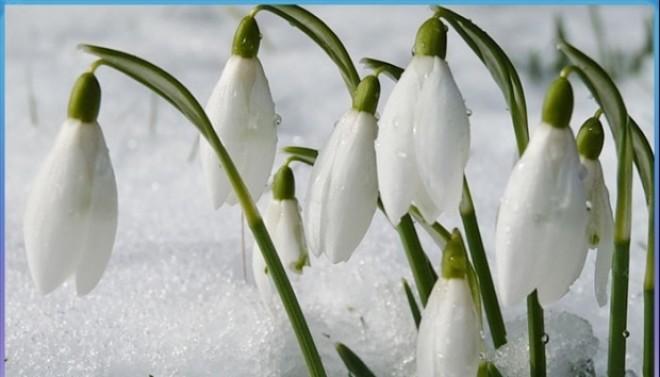 Directorul ANM, avertisment sumbru după iarna fără zăpadă din România. Recordul din 1989 a fost doborât