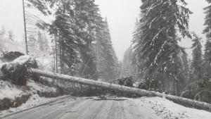 Nu porniti la drum! Viscolul face ravagii in Prahova. Drumurile spre Cheia, Cota 1400 si Mizil-Buzau, INCHISE. La Ploiesti vantul rupe copaci si smulge acoperisuri