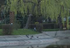 Parcurile din Ploieşti au fost închise de astăzi. Vedeţi anunţul oficial al Primăriei!