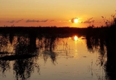 IRONIA SORȚII: Guvernul dă liber la pescuit în perioada de prohibiție, prin Ordonanța Militară 8