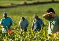 SCANDAL de proporții! Ororile prin care trec muncitorii români sunt 'aprobate' de către politicienii din Germania
