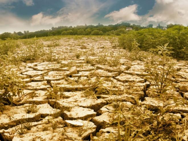 După pandemie ne va LOVI și SECETA - Deși s-a plantat mai mult vom culege mai puține cereale, arată studiile