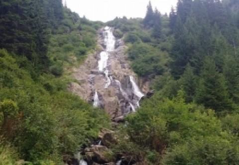 Doi bărbaţi au fost prinşi de jandarmi montani pe Valea Azugii cu un sfert de tonă de cetină de brad