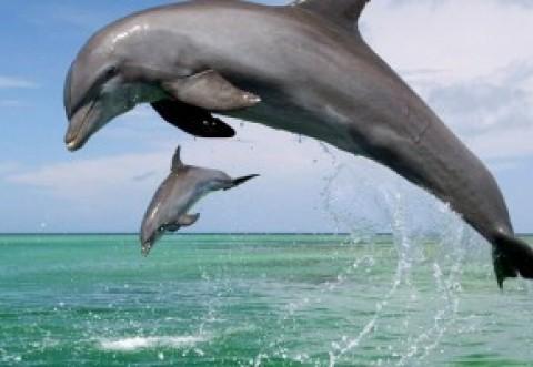 Cât costă să mergi la mare. Au scăzut prețurile! Locul de unde se pot vedea delfinii