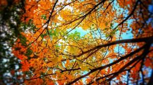 PROGNOZA METEO. Săptămâna începe cu cer senin, sfârşit de noiembrie fără precipitaţii