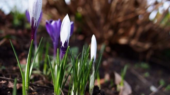 Meteo, 3 martie. Vremea se încălzește. Ce temperaturi sunt anunțate