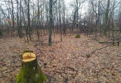 Jaf de proporții biblice în pădurile României (I)