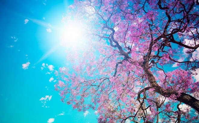 Meteo 26 martie. Primăvara își intră în drepturi. Începe să se încălzească