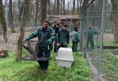 Au ajuns animale noi la ZOO Bucov, relocate de la gradina din Timisoara, inchisa definitiv