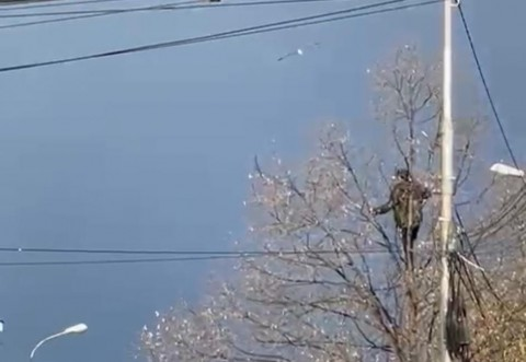 Un barbat beat s-a urcat intr-un copac si ameninta ca se arunca. Zeci de pompieri si  politistiau sosit in Piata Anton