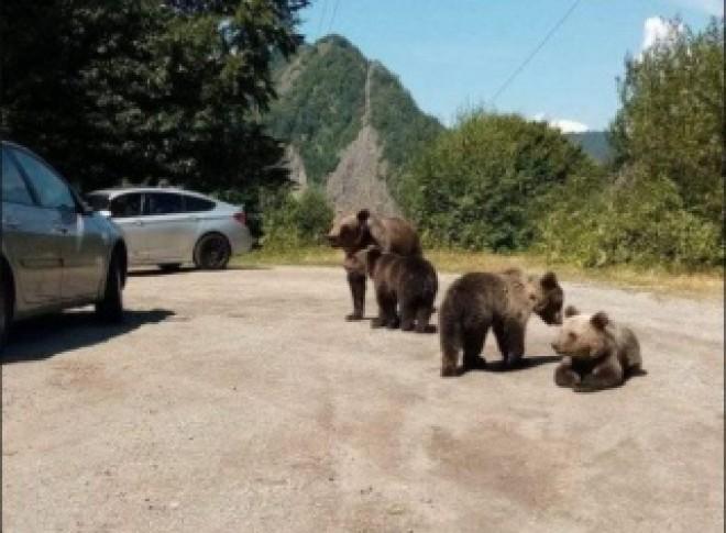 Am avut dreptate! Guvernul a dat mana libera la uciderea ursilor, prin Ordonanta de Urgenta