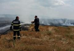 INCENDIU puternic in Bucov. Focul a mistuit 8 hectare de miriste