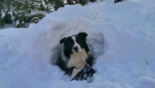 Carp, singurul câine de intervenție al Salvamont Prahova, lovit în burtă de o turistă