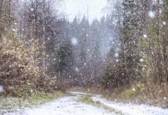 Frigul nu se lasa dus! ANM anunţă lapoviţă şi ninsori