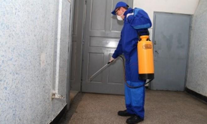 Deratizare pe spatiul public, in Ploiesti. Administratorii si proprietarii de locuinte, sfatuiti sa efectueze operatiunea simultan
