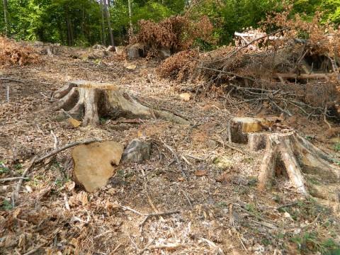 Tăietorii de lemne, prinşi pe bandă rulantă în Prahova