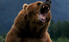 Bărbat atacat de urs în Ştefeşti, transportat la Spitalul de Urgenţă din Ploieşti