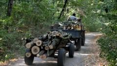 Hoţi de lemne prinşi în pădurea Ocolului Silvic Doftana