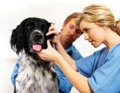 Toţi câinii din Prahova trebuie sterilizaţi până la 1 ianuarie 2015. Ce amenzi rişti dacă nu faci asta