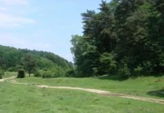 Parchetul Ploieşti, sesizat pentru retrocedarea a 980 de hectare de pădure din Magureni