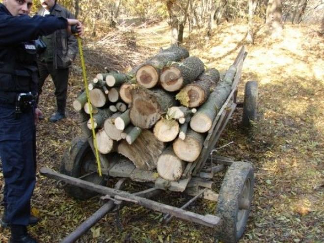 Tăietorii ilegali de lemn din Prahova s-au înmulțit odată cu venirea GERULUI
