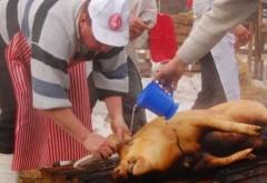 Porci depistaţi cu TRICHINELOZĂ în Prahova