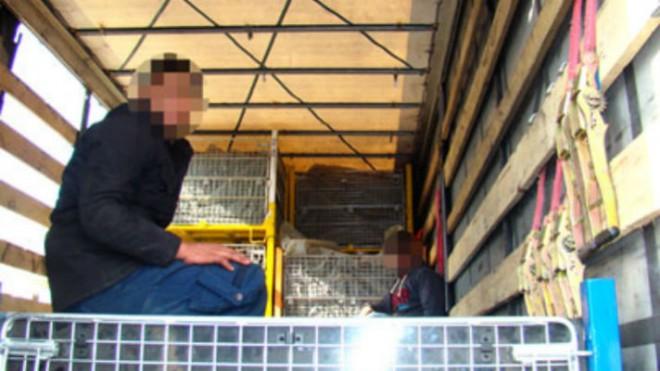 Doi imigranţi afgani, descoperiţi într-un TIR la depozitul Kaufland de lângă Ploieşti