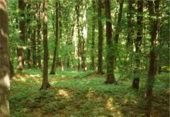 INCREDIBIL! Cum vor fi omorâte insectele din pădurile din Prahova