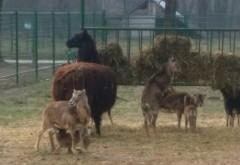 EXCLUSIV. ANIMALE NOI la Grădina Zoologică Bucov GALERIE FOTO