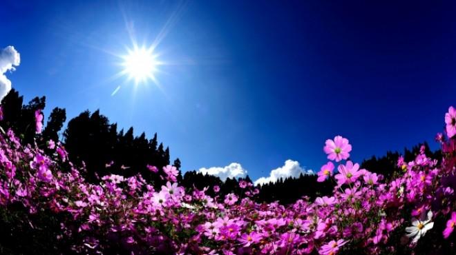 PROGNOZA METEO pe două săptămâni: Cum va fi vremea până la Florii