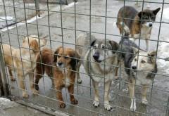 Ajută şi tu adăpostul de câini din Plopeni!