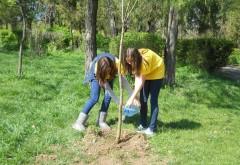 Elevii ploieşteni plantează arbori în Parcul Cina