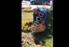INCREDIBIL! Un barbat prins in timp ce fura flori de pe domeniul public, cu LADA VIDEO