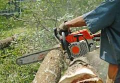 Tăierile ilegale de păduri pot fi reclamate printr-o APLICATIE PENTRU TELEFON