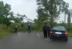 FURTUNĂ în Prahova. Un copac a căzut pe DN1 în Campina