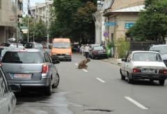 Un om al străzii a blocat circulația în Ploiești ca să se roage VIDEO