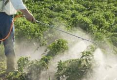 Cum să ne ferim, ca pesticidele din alimente să nu ne afecteze organismul. Nu este suficientă o simplă spălare