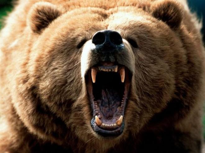 Barbat atacat de urs la vanatoare in Prahova
