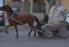 Căruțașii care circulă prin Ploiești au fost AMENDATI