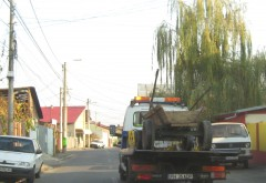 Polițiștii locali au amendat căruțașii din Ploiești și au confiscat o căruță
