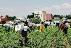 Românii renunţă încet, încet la lucrul în Spania şi Italia