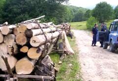 Jandarmii prahoveni au prins cinci tăietori ilegali de lemn