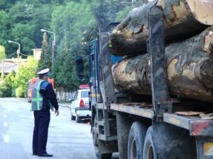 Controale printre transportatorii de lemn din judeţ .Vezi ce sanctiuni au aplicat politistii