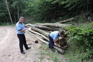 Acțiune pentru prevenirea și combaterea furtului de lemne in comunele Șotrile și Valea Doftanei