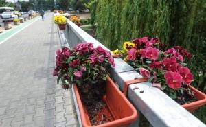 S-a ales cu dosar PENAL pentru niste ghivece cu flori